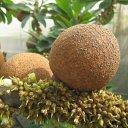 Мармеладный плод